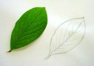 leaf02_1